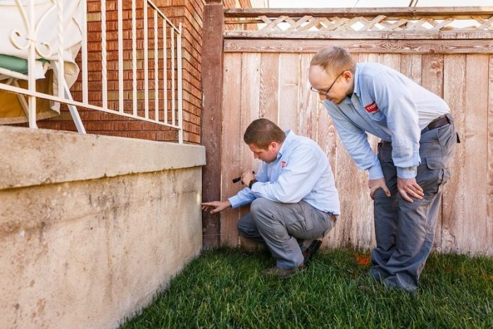 Thorn professional inspecting for termites