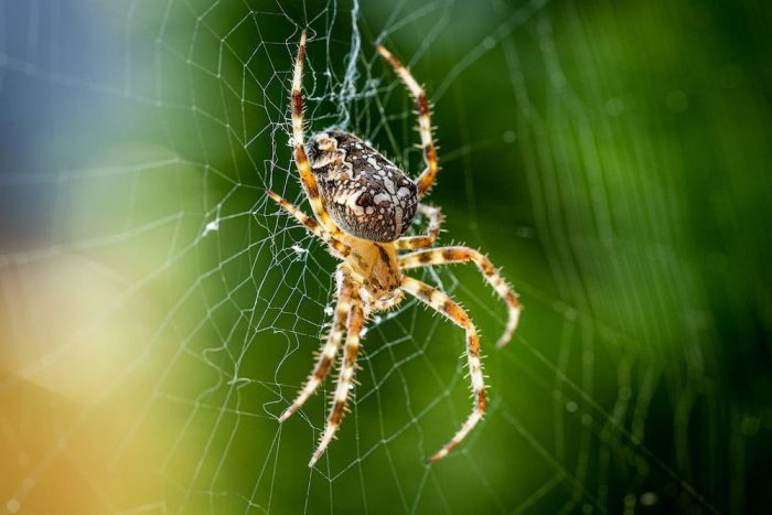 Close up of an orb weaver spider