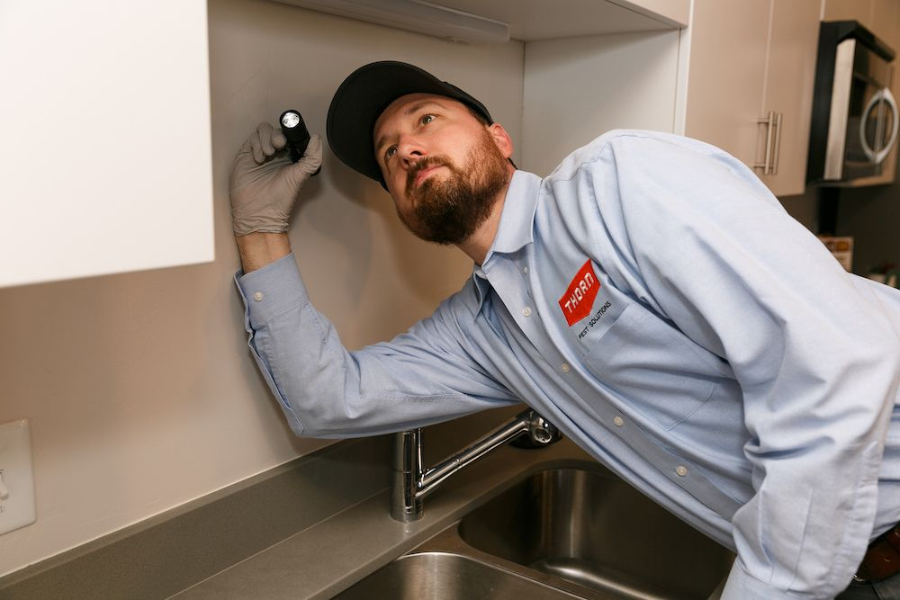 Thorn professional searching for pests under the top kitchen cabinets