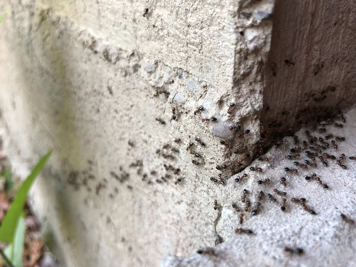 Group of ants on a concrete foundation