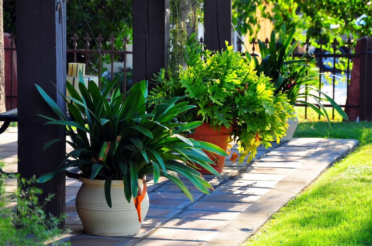 Patio with green potted plants
